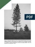 Genetics of Wood Production (1995)