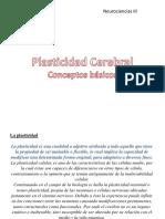 Plasticidad Cerebral Conceptos Basicos