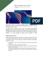 Investigación Teoría Del mundo del ARN