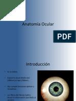 Clase 2. Anatomía Ocular. Globo Ocular