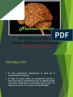 introduccion a la neuroanatomia