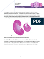 Kidney Introduction PDF 508