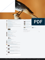 Bird _ Best on Black Www.fluidr.com
