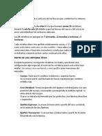 LAS VÉRTEBRAS (Apuntes).docx