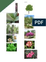 10 Plantas Conocidas Con Nombre