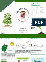 fotocintesis 2.pdf