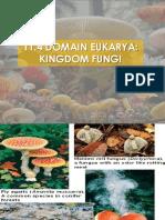 Domain Eukarya [Kingdom Fungi]