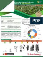 Ficha Tecnica02 Cultivo Maiz Amilaceo