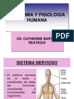 Tema 15 Sistema Nervioso