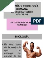 Clase 7.1 Músculos