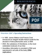 Molecular Basic of Inheritance