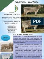 ganado-brown-swiss-GENETICA.pptx