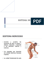 Clase 3 Sistema Nervioso