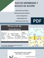 Potencial de Membrana.pptx