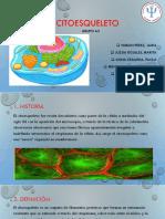 El citoesqueleto DIAPO PDF.pdf