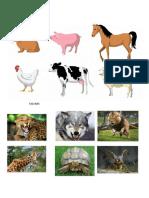 ANIMALES DOMESTICOS.docx