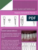 27805732-Incisivo-Lateral-Inferior.pptx