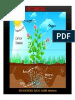 Fotosintesis - Quichca.pdf