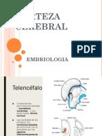 Embrio Final 9