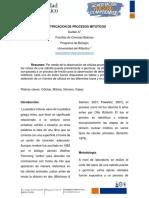 Identificacion de Procesos Mitoticos