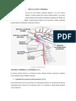 CIRCULACIÓN CEREBRAL.docx
