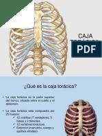 Caja Toracica 170319043057 Converted