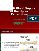 Nerve and Blood Supply of Upper Extremities