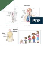 Aparato circulatorioaparato respiratorio