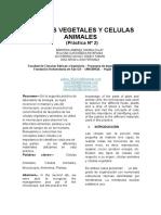 07.1 Informe - Celulas Vegetales y Animales