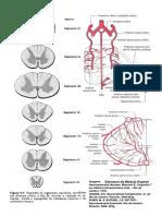 2_pranchas_neuro.pdf
