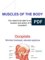 Muscle of the Body