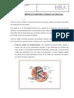 CARACTERÍSTICAS COMUNES A TODAS LAS CÉLULAS (2).docx