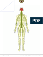 Visualizing the Nervous System