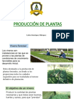 Producción de Plantas 2018