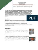 PRACTICA DE LABORATORIO  Y DETERMINACIÓN DE MACROMOLÉCULAS