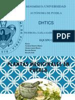 plantas-medicinales (1).pptx