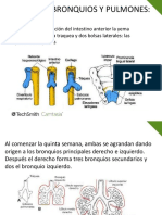 Embriologia Traquea Pulmones