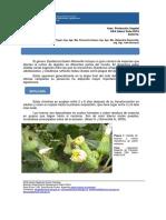 Script-tmp-Inta Informe Chinche Tintrea