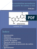 Producción de metabolitos secundarios a partir de cultivo in vitro
