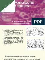 Hist 02 . Formas Celulares y Epitelios 2019-1