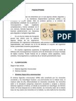 Fagocitosis Tipos y Clasificacion