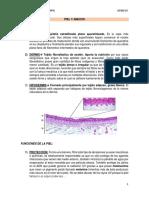Clase 1 s3 Histologia III (1)