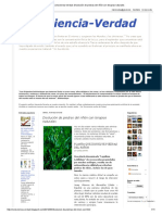 Planta Que Disuelve Piedras Lepidium Latifolium Conscienciaverdad Disolución de Piedras Del Riñón Con Terapias Naturales