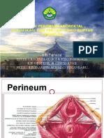 perineum anorektal