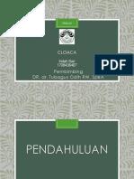 PPT Cloaca.pptx