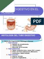 Sistema Digestivo Hombre