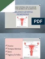 1.- Anatomía Aparato Reproductor Femenino (1)