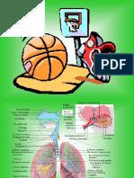 2.- Anatomia Respiratoria i