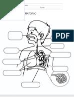 El Aparato Respiratorio Ficha Recursosep