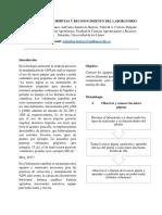 Informe Laboratorio Biología molecular